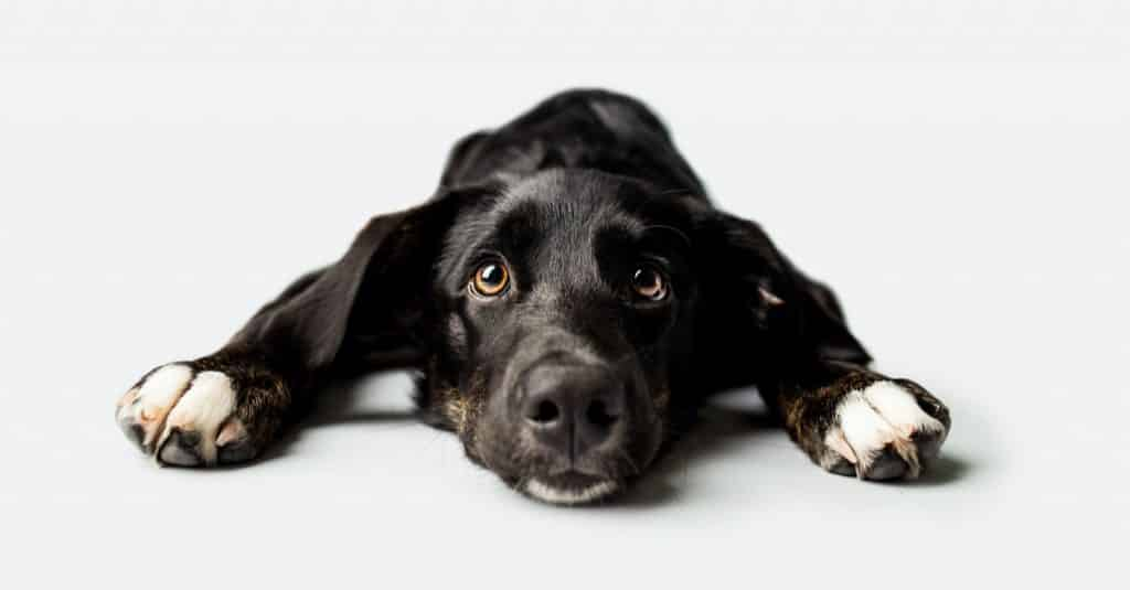 Do Joint Supplements for Dogs Work Let's Explore